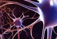 Специалисты ДВО РАН научились сращивать поврежденные нервные волокна